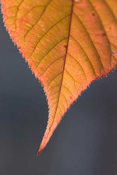 orange-leaf.jpg