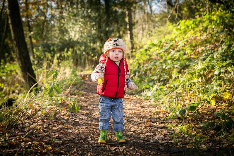 Sunnyhurst woods autum 2015