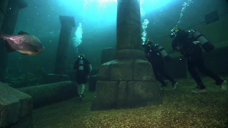 Underwater Walk Edit.00_00_55_20.Still024.jpg