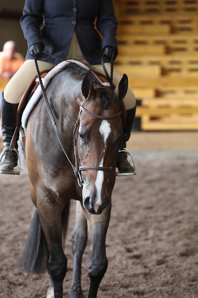 Junior Hunter Under Saddle