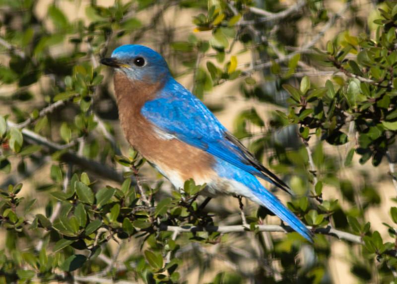 Blue Bird-00487.jpg