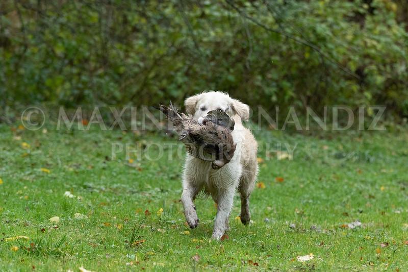 Dogs-4737.jpg