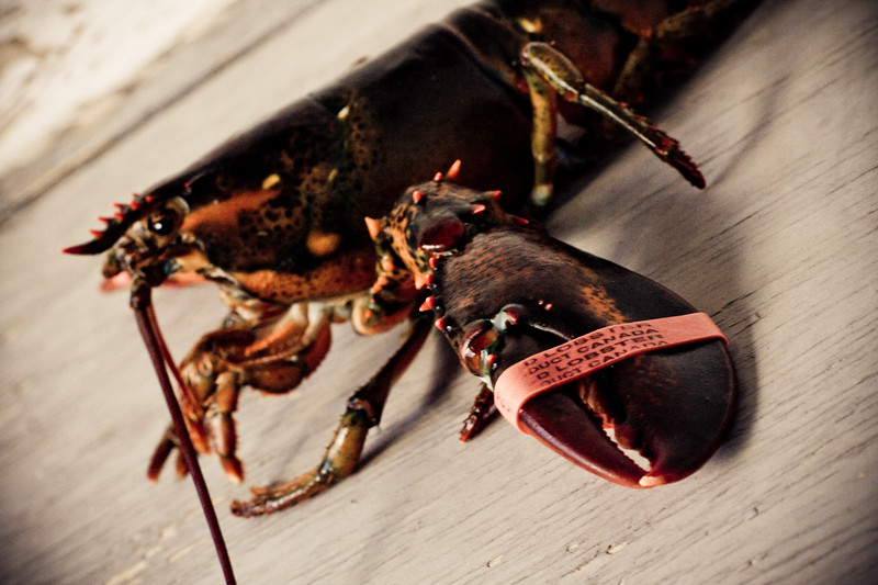 lonely-lobster_4216638088_o.jpg