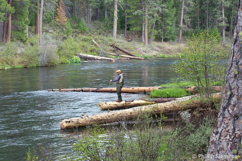 Fly-fishing on the Metolius River