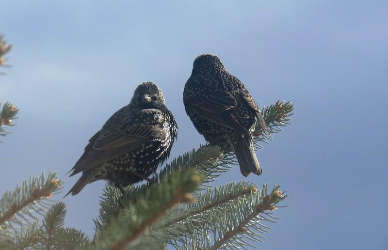 birds (185).jpg