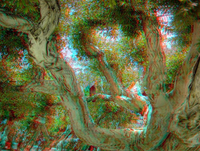 AC_SOPH_HDR_02.jpg