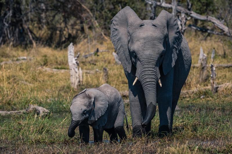 Botswana_June_2017 (3257 of 6179).jpg