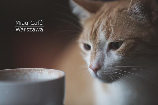 Miau Cat Cafe