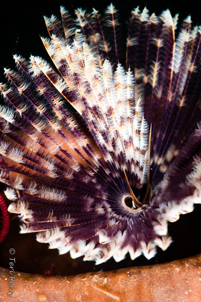WORM - feather duster -0037.jpg