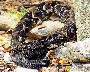 Wildlife in Pisgah