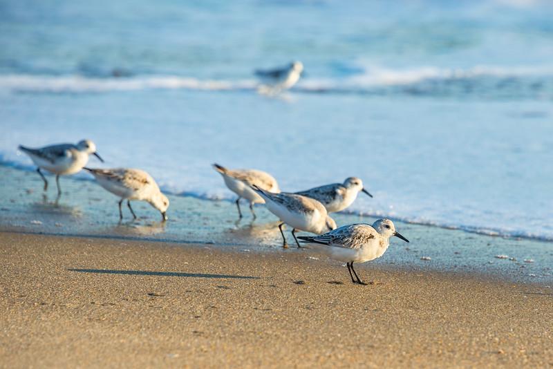 birds 5314 4x6.jpg