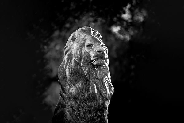 M21061- Black & White Lions