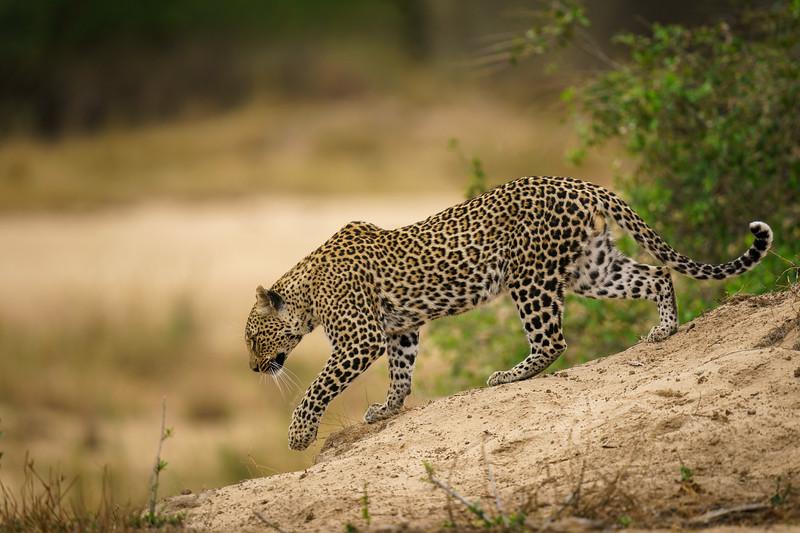 LeopardHills-20191030-2811.jpg