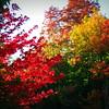 Fall Lights