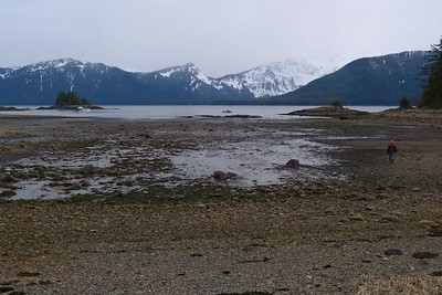The Tide is Out in Our Cove April 2013, Cynthia Meyer, Chichagof Island, Alaska