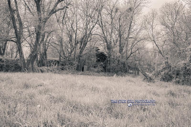 KC Landscape-90.jpg