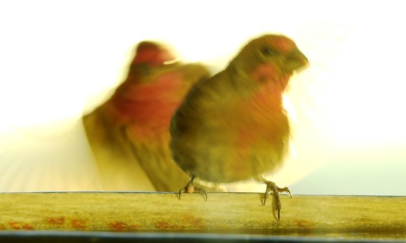 birds (115).JPG
