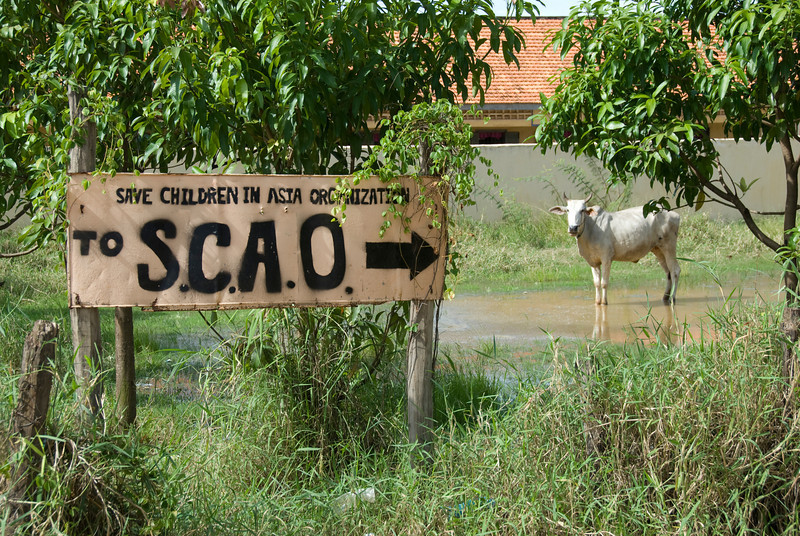 A solitary cow behind sign towards orphanage in Phnom Penh, Cambodia