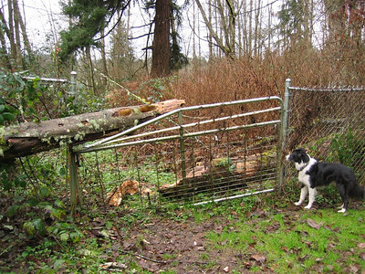 Fence and Flood Disasters 2004