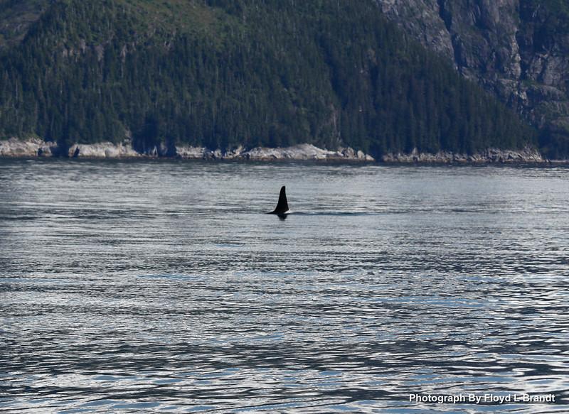 Alaska Kenai Fjords0049.JPG