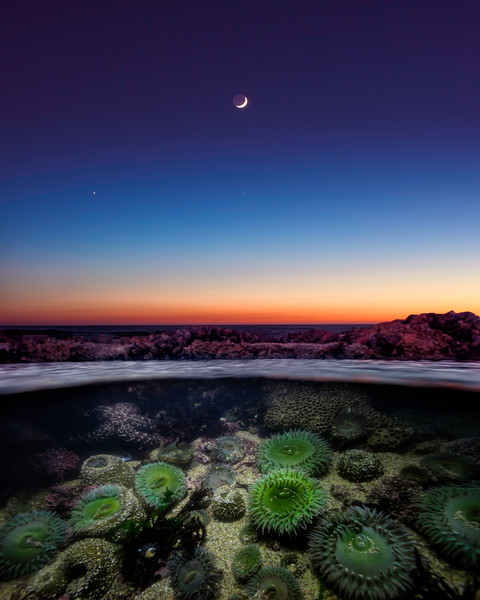 Tide Pool Twilight