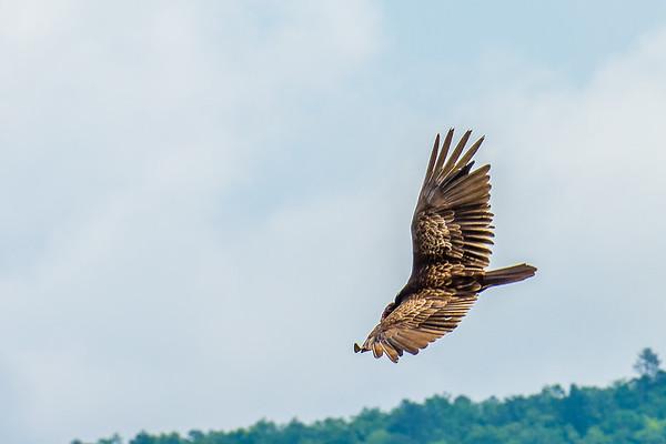 Birds Of Prey - 5-29-20