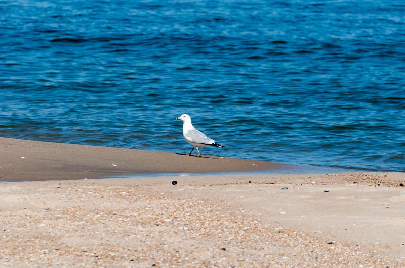 2018 March Beach-30.jpg
