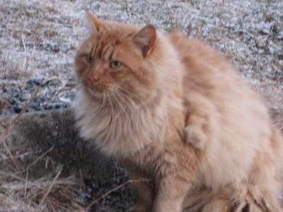 Mattie Cat