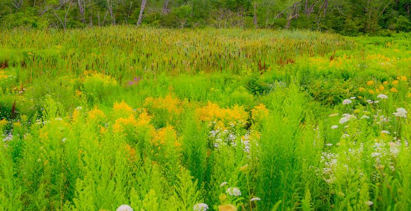 Maine Green 45
