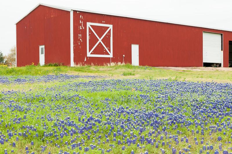 2015_4_3 Texas Wildflowers-7529.jpg