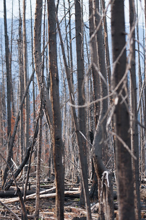 28 Day 4 Fri: Forest fire site