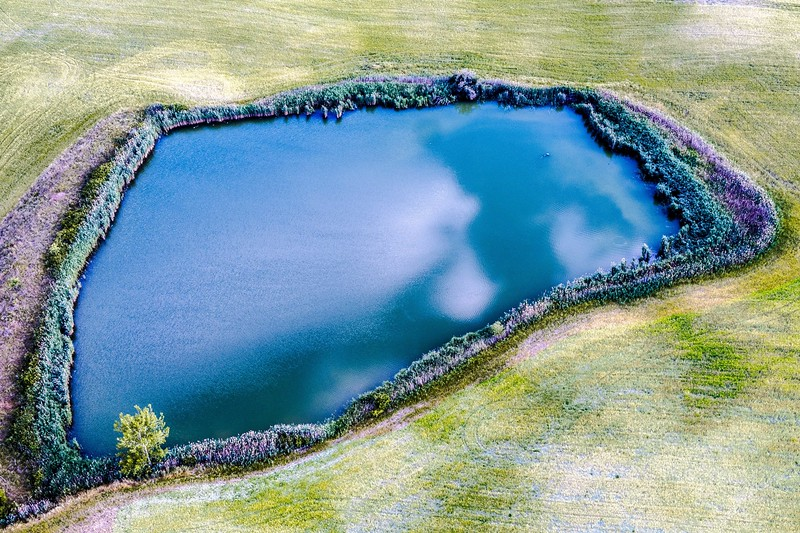 Pond Lined by Lavender Tuscany-.jpg