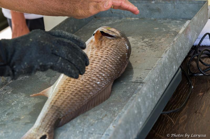 ACGFA Kingfish Day 1-0005.jpg