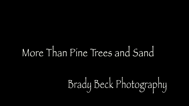 More than Pine trees and Sand