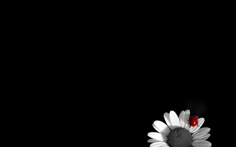 Black (31).jpg
