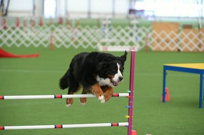 Berks County Dog Training Club AKC Agility Trial August 29-31