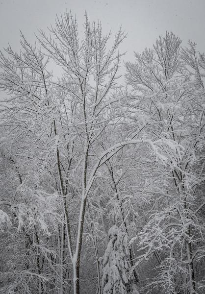 November 2018 Snowfall-_5009222.jpg