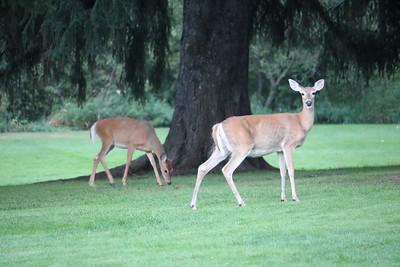 Wildlife on Little Spokane River 9-7-18