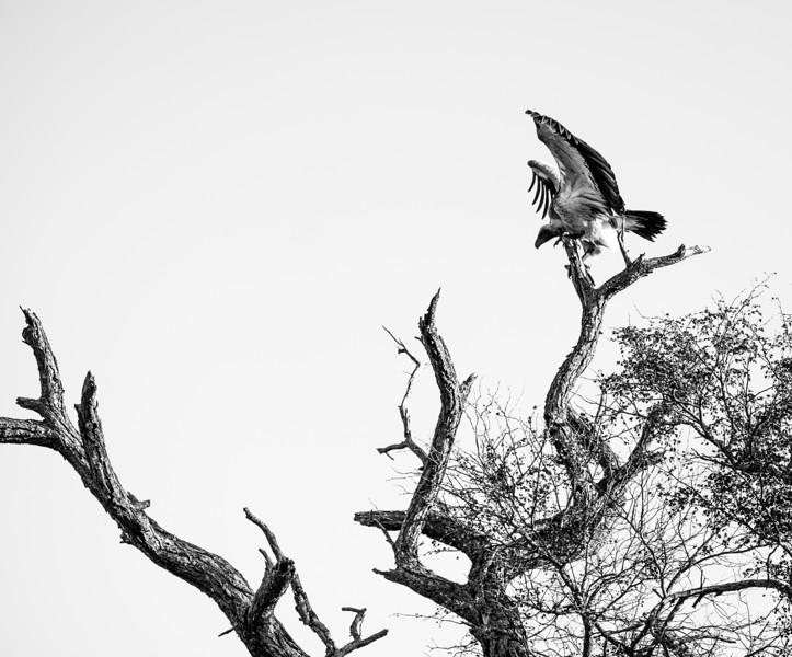 201706_AFRICA-86.jpg