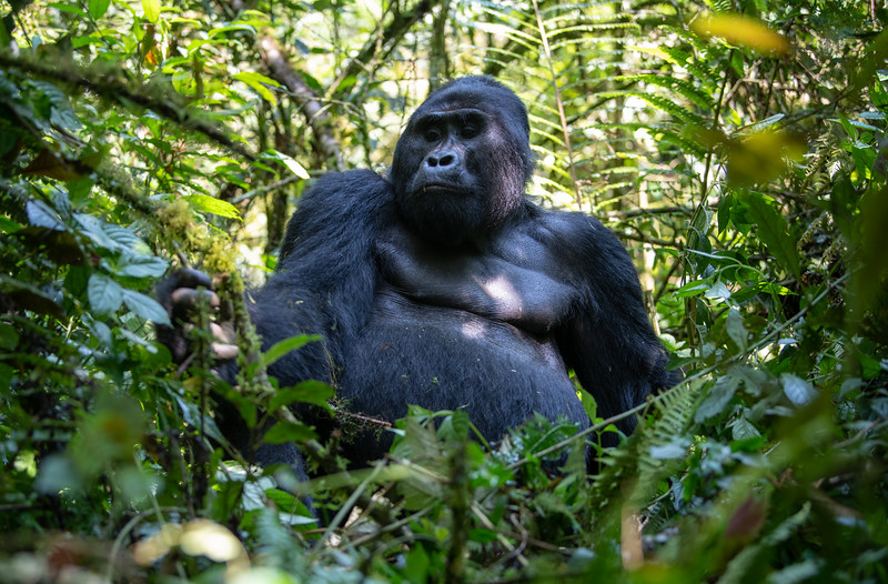 Uganda_T_Gor-473.jpg