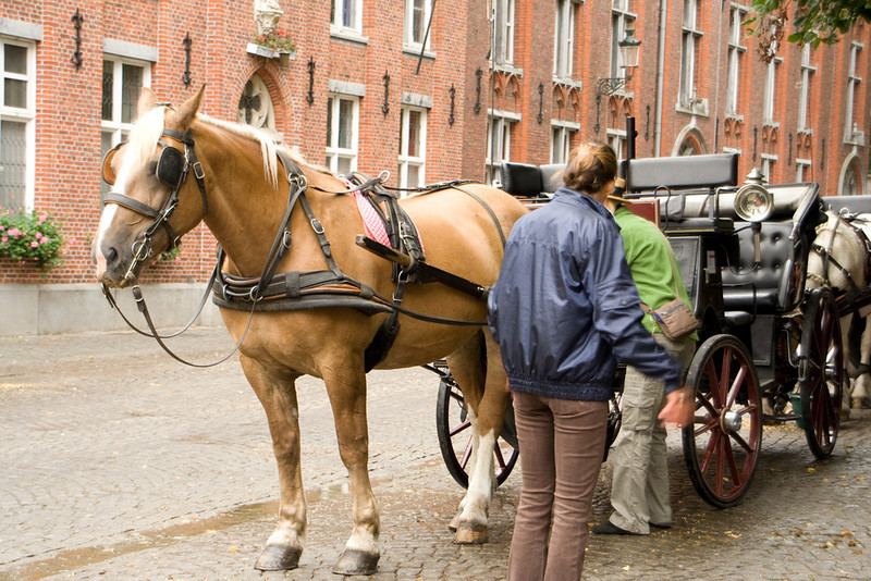Bruges. You can take a ride in a horse drawn carriage. By the end of the day, I recognized all eight working horses.