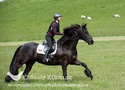 Friesian Experience Mehrnoosh May 2015