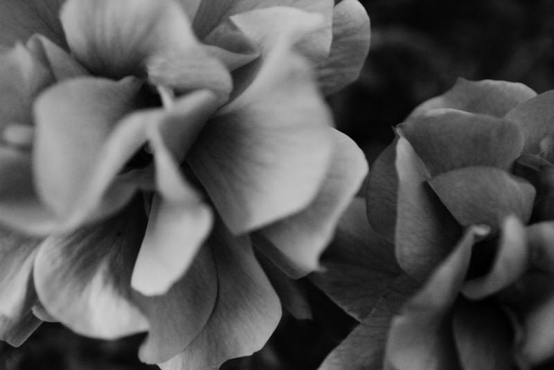 nature-005.jpg