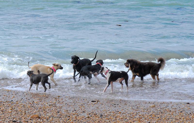 dogs_beach-019.jpg