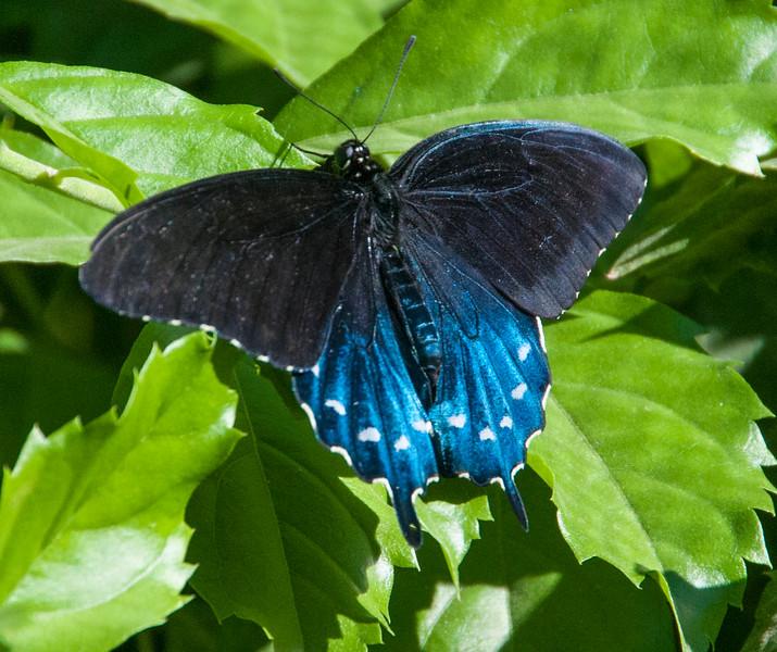 Butterflies-9.jpg