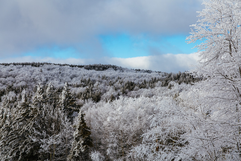 2020-02-01_SN_KS_Frosty Trees-0448.jpg