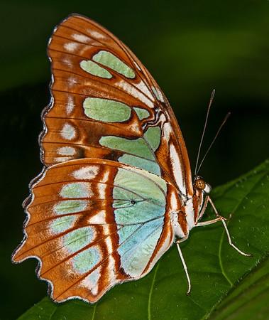 Butterfly World - August 20, 2013