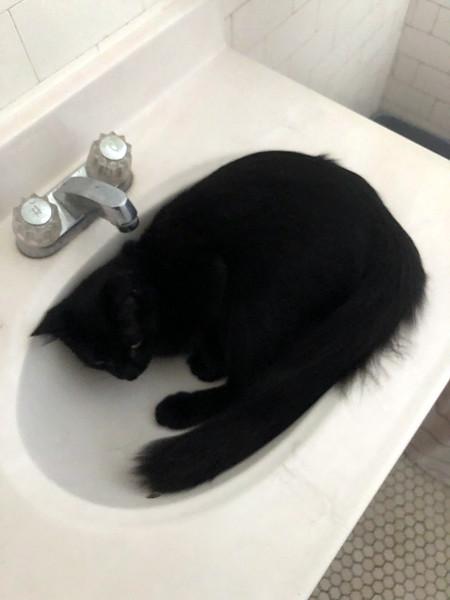 2018-10-13-0002-St Louis-Simon, the Cat.jpg