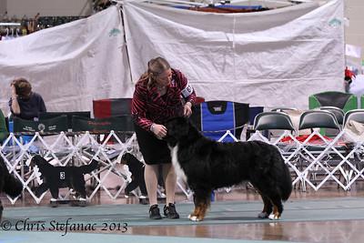 Versatility Dog Under 7yrs BMDCA 2013