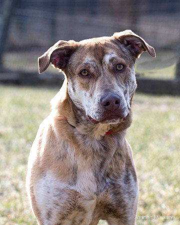 Middleburg Humane dogs 1-19-18